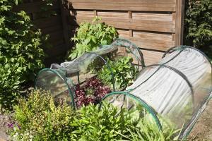 Kitchen garden for children with vegetables